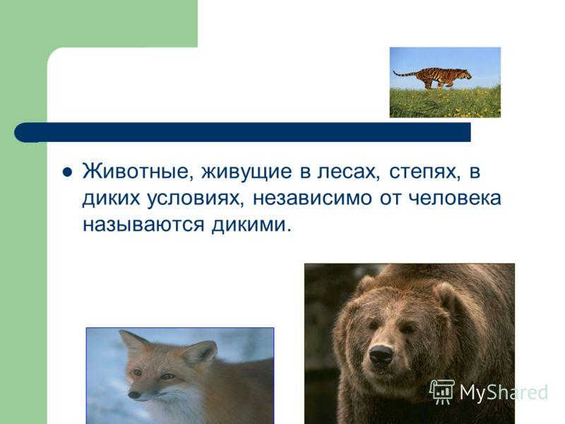 Животные, живущие в лесах, степях, в диких условиях, независимо от человека называются дикими.
