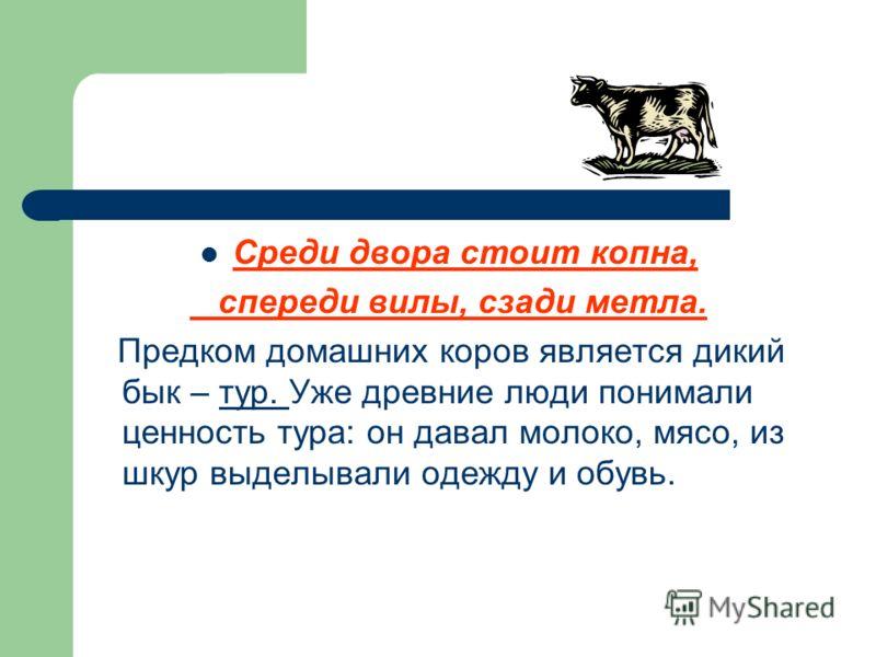 Среди двора стоит копна, спереди вилы, сзади метла. Предком домашних коров является дикий бык – тур. Уже древние люди понимали ценность тура: он давал молоко, мясо, из шкур выделывали одежду и обувь.