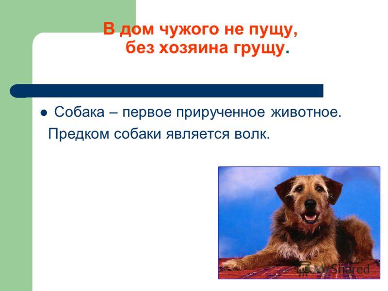 В дом чужого не пущу, без хозяина грущу. Собака – первое прирученное животное. Предком собаки является волк.