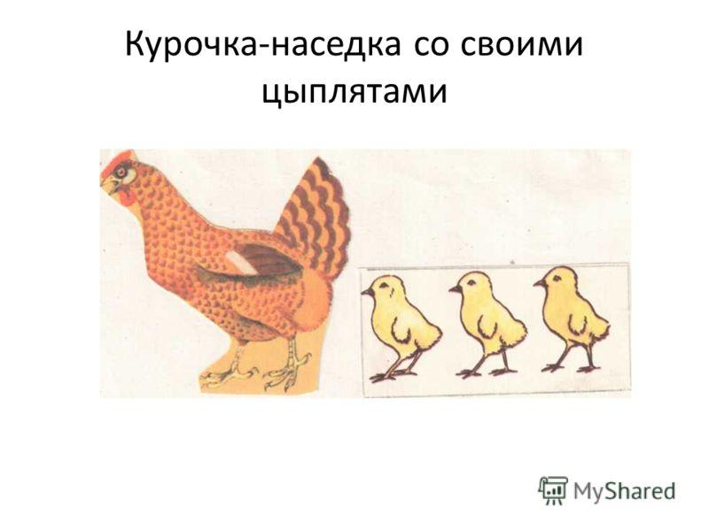 Курочка-наседка со своими цыплятами