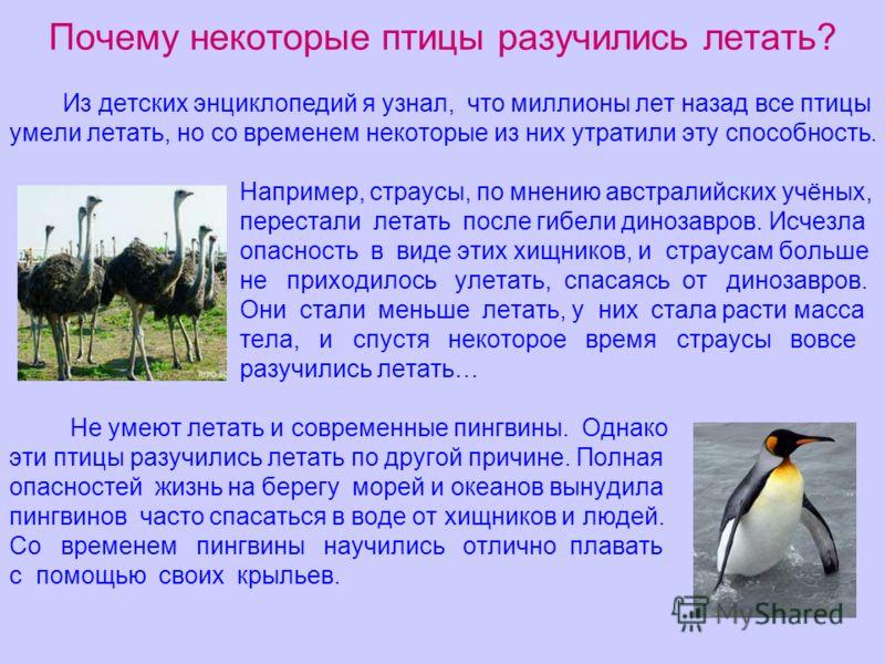 Почему некоторые птицы разучились летать? Из детских энциклопедий я узнал, что миллионы лет назад все птицы умели летать, но со временем некоторые из них утратили эту способность. Например, страусы, по мнению австралийских учёных, перестали летать по