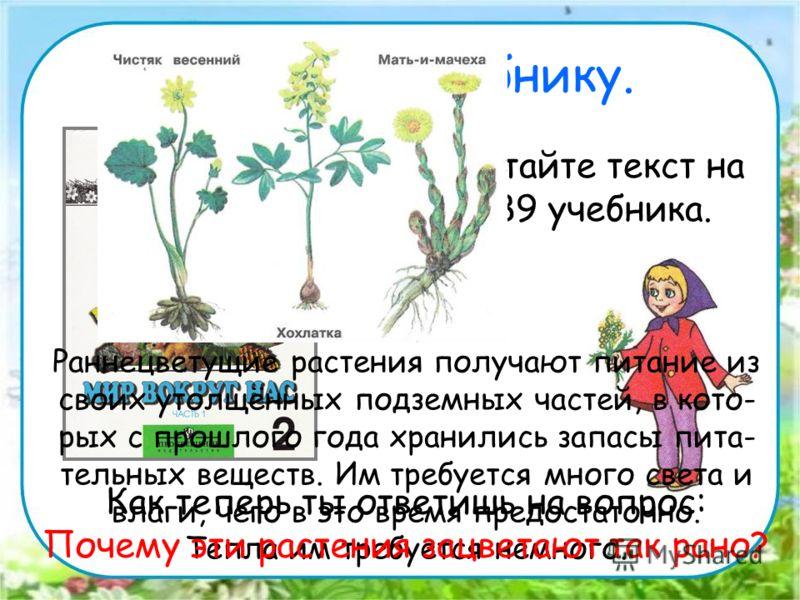 Работа по учебнику. Прочитайте текст на стр. 89 учебника. Раннецветущие растения получают питание из своих утолщённых подземных частей, в кото- рых с прошлого года хранились запасы пита- тельных веществ. Им требуется много света и влаги, чего в это в