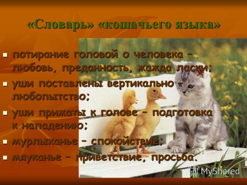 «Словарь» «кошачьего языка» потирание головой о человека – любовь, преданность, жажда ласки; потирание головой о человека – любовь, преданность, жажда ласки; уши поставлены вертикально – любопытство; уши поставлены вертикально – любопытство; уши приж