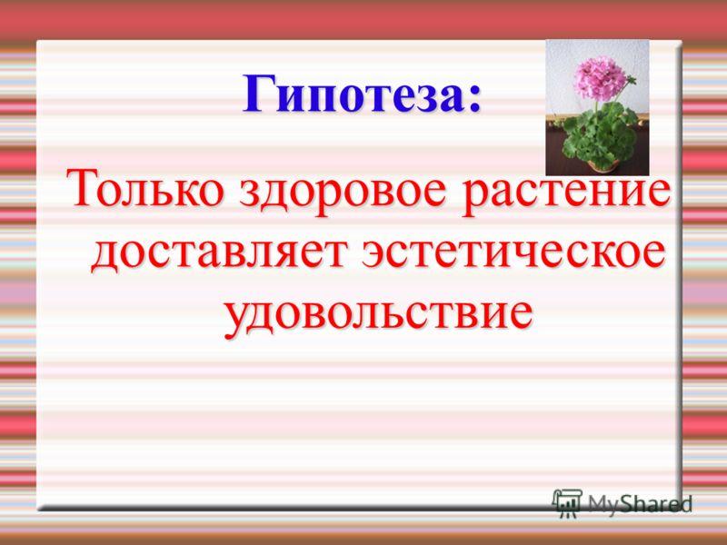 Гипотеза: Только здоровое растение доставляет эстетическое удовольствие