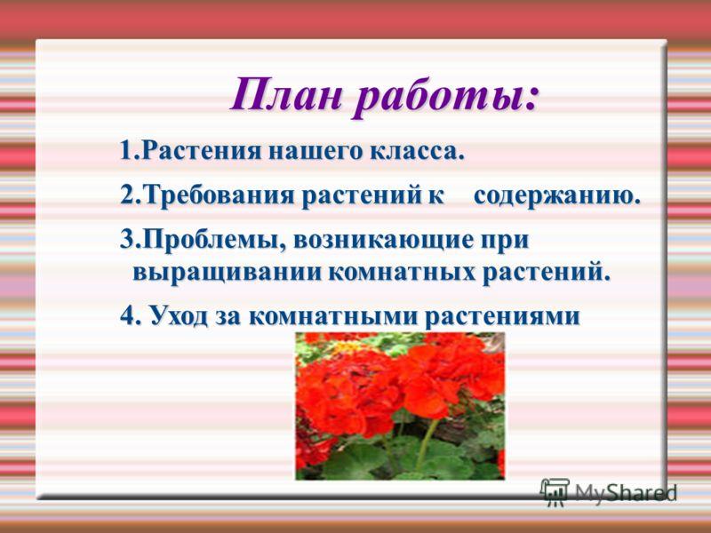 План работы: 1.Растения нашего класса. 1.Растения нашего класса. 2.Требования растений к содержанию. 2.Требования растений к содержанию. 3.Проблемы, возникающие при выращивании комнатных растений. 3.Проблемы, возникающие при выращивании комнатных рас