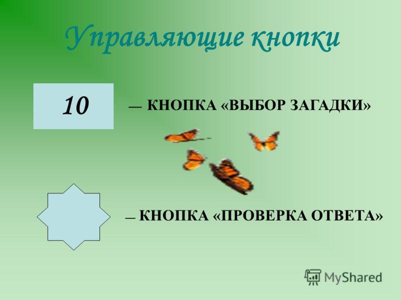 Управляющие кнопки 10 КНОПКА «ВЫБОР ЗАГАДКИ» КНОПКА «ПРОВЕРКА ОТВЕТА»