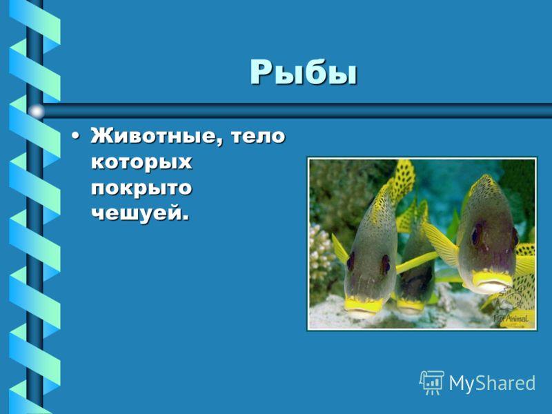 Рыбы Животные, тело которых покрыто чешуей.Животные, тело которых покрыто чешуей.