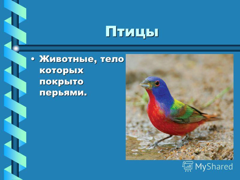 Птицы Животные, тело которых покрыто перьями.Животные, тело которых покрыто перьями.