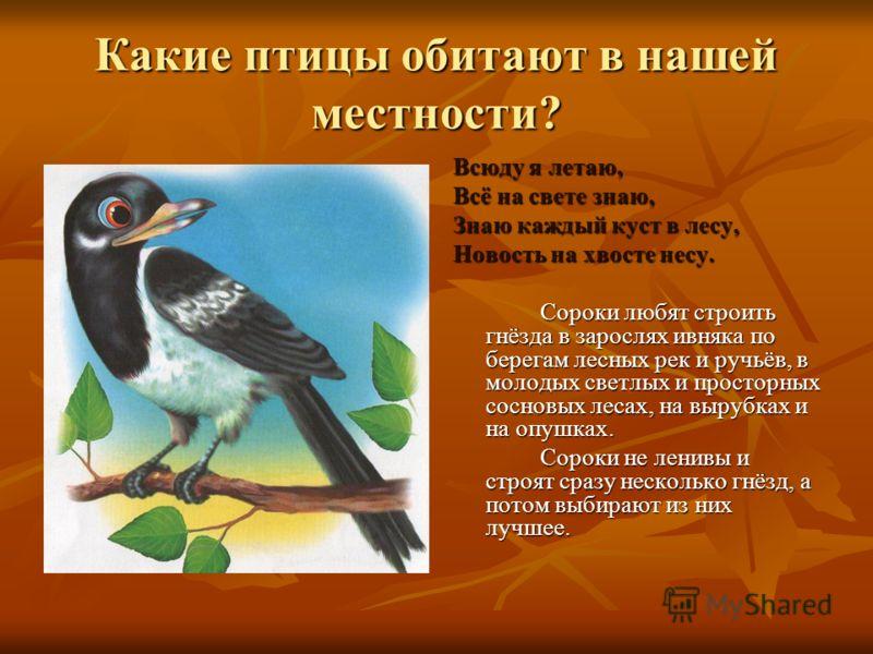 Какие птицы обитают в нашей местности? Всюду я летаю, Всё на свете знаю, Знаю каждый куст в лесу, Новость на хвосте несу. Сороки любят строить гнёзда в зарослях ивняка по берегам лесных рек и ручьёв, в молодых светлых и просторных сосновых лесах, на