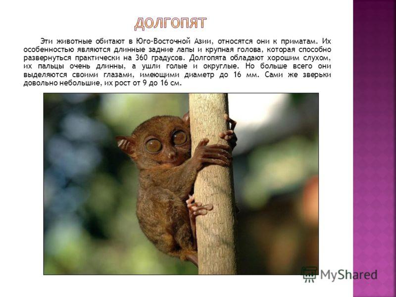 Эти животные обитают в Юго-Восточной Азии, относятся они к приматам. Их особенностью являются длинные задние лапы и крупная голова, которая способно развернуться практически на 360 градусов. Долгопята обладают хорошим слухом, их пальцы очень длинны,