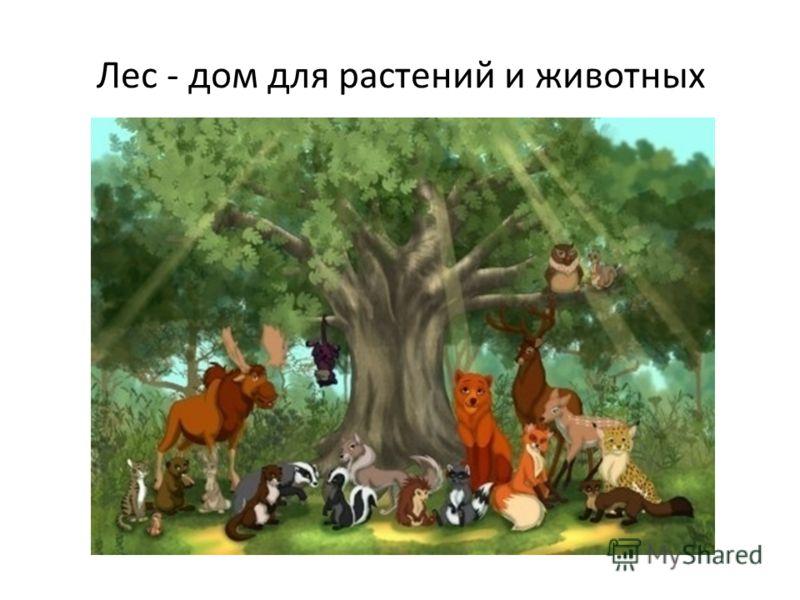 Лес - дом для растений и животных