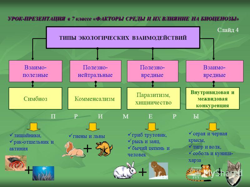 УРОК-ПРЕЗЕНТАЦИЯ в 7 классе «ФАКТОРЫ СРЕДЫ И ИХ ВЛИЯНИЕ НА БИОЦЕНОЗЫ» ТИПЫ ЭКОЛОГИЧЕСКИХ ВЗАИМОДЕЙСТВИЙ Слайд 4 Взаимо- полезные Полезно- нейтральные Взаимо- вредные лишайники, рак-отшельник и актиния Полезно- вредные СимбиозКомменсализм Паразитизм,