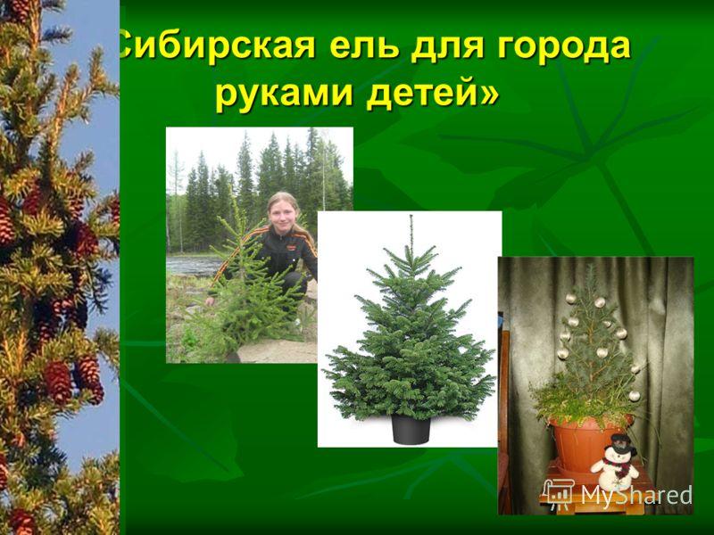 «Сибирская ель для города руками детей»