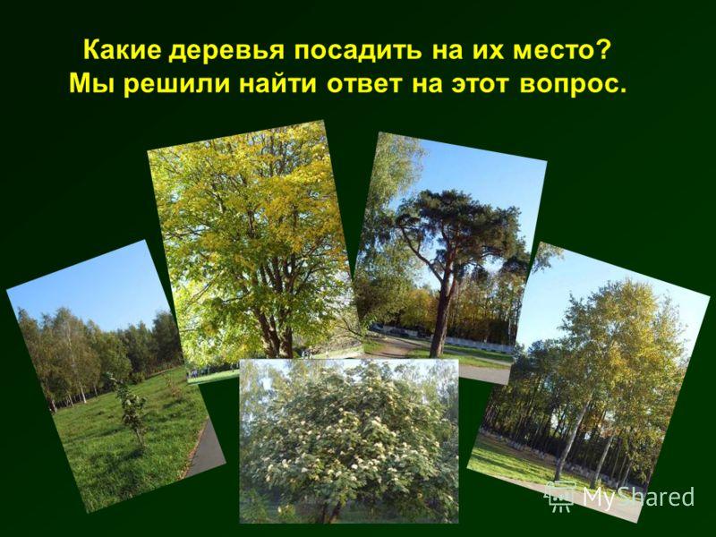 Какие деревья посадить на их место? Мы решили найти ответ на этот вопрос.