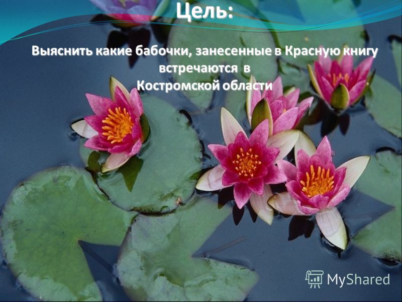 Цель: Выяснить какие бабочки, занесенные в Красную книгу встречаются в Костромской области