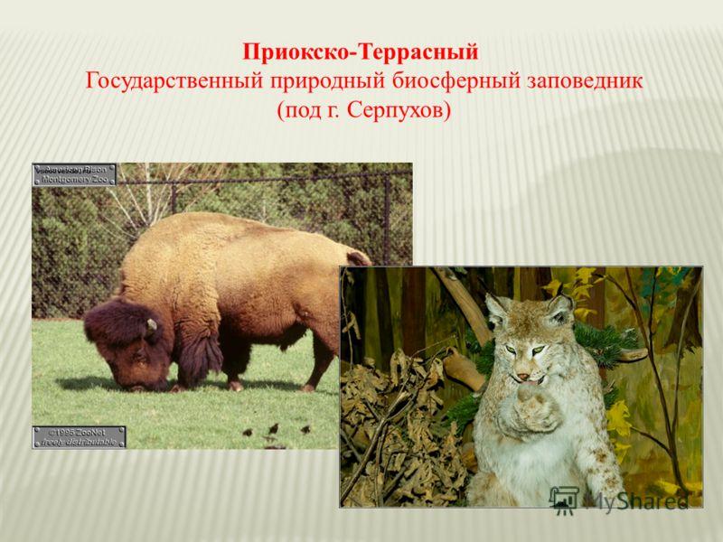 Приокско-Террасный Государственный природный биосферный заповедник (под г. Серпухов)