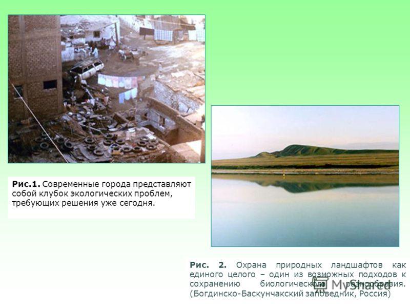Рис.1. Современные города представляют собой клубок экологических проблем, требующих решения уже сегодня. Рис. 2. Охрана природных ландшафтов как единого целого – один из возможных подходов к сохранению биологического разнообразия. (Богдинско-Баскунч