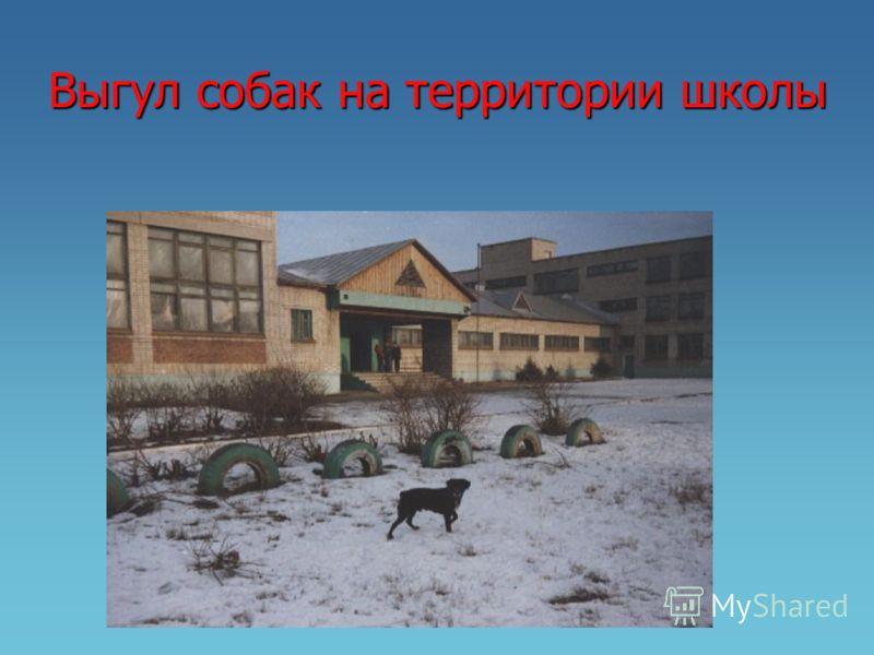 Выгул собак на территории школы