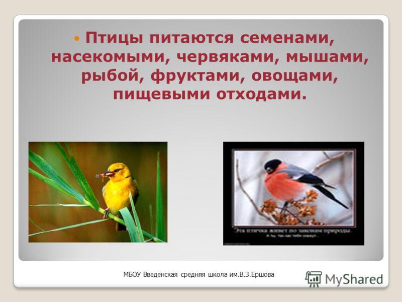 Для поддержания температуры тела птице требуется много энергии, которую она получает только из пищи. МБОУ Введенская средняя школа им.В.З.Ершова