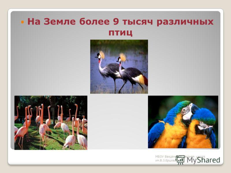 Птицы – единственные животные с перьями. МБОУ Введенская средняя школа им.В.З.Ершова