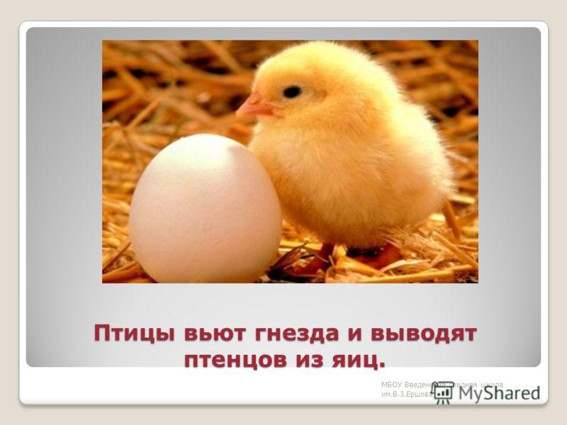 На Земле более 9 тысяч различных птиц МБОУ Введенская средняя школа им.В.З.Ершова