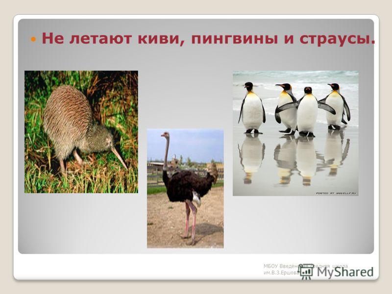 Большинство птиц умеют летать. МБОУ Введенская средняя школа им.В.З.Ершова