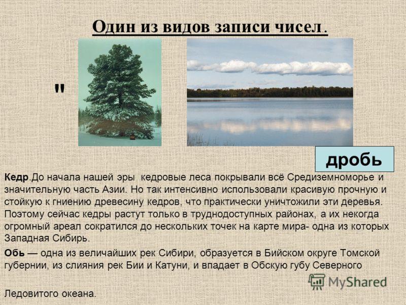Кедр.До начала нашей эры кедровые леса покрывали всё Средиземноморье и значительную часть Азии. Но так интенсивно использовали красивую прочную и стойкую к гниению древесину кедров, что практически уничтожили эти деревья. Поэтому сейчас кедры растут