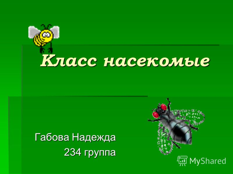 Класс насекомые Габова Надежда 234 группа