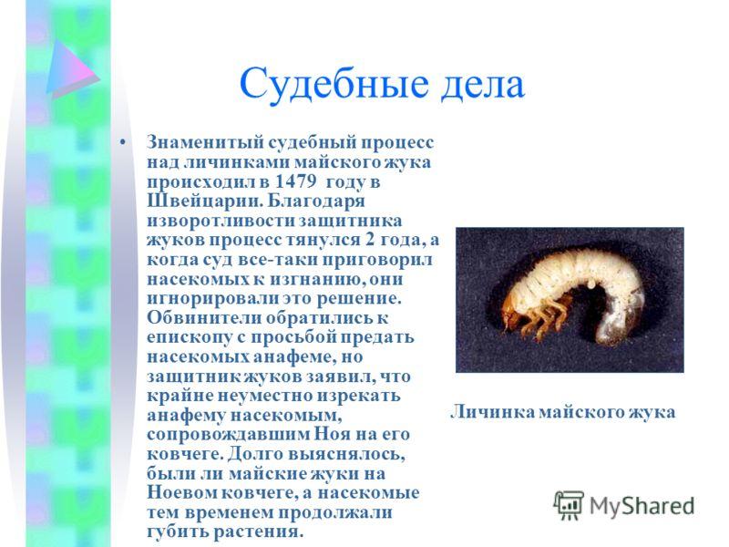 Судебные дела Знаменитый судебный процесс над личинками майского жука происходил в 1479 году в Швейцарии. Благодаря изворотливости защитника жуков процесс тянулся 2 года, а когда суд все-таки приговорил насекомых к изгнанию, они игнорировали это реше