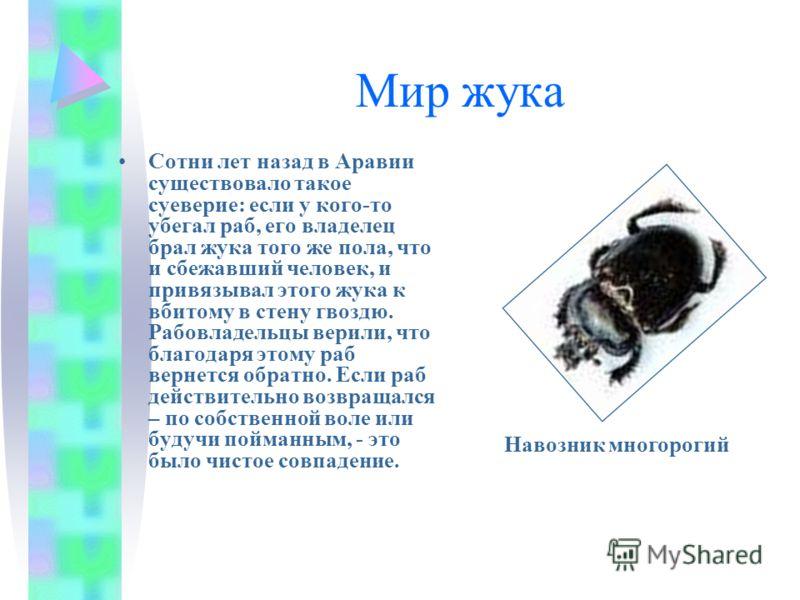 Мир жука Сотни лет назад в Аравии существовало такое суеверие: если у кого-то убегал раб, его владелец брал жука того же пола, что и сбежавший человек, и привязывал этого жука к вбитому в стену гвоздю. Рабовладельцы верили, что благодаря этому раб ве