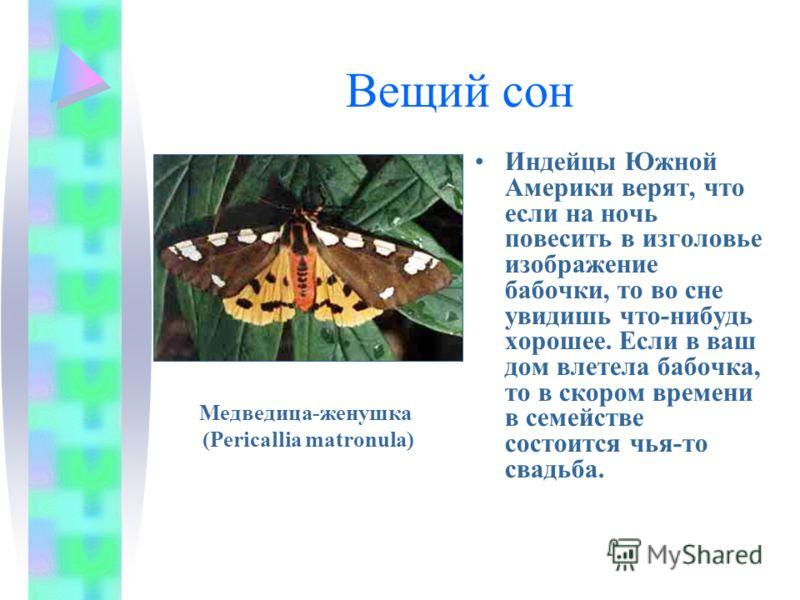 Вещий сон Индейцы Южной Америки верят, что если на ночь повесить в изголовье изображение бабочки, то во сне увидишь что-нибудь хорошее. Если в ваш дом влетела бабочка, то в скором времени в семействе состоится чья-то свадьба. Медведица-женушка (Peric