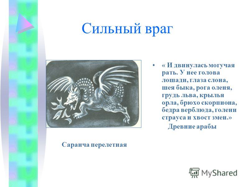 Сильный враг « И двинулась могучая рать. У нее голова лошади, глаза слона, шея быка, рога оленя, грудь льва, крылья орла, брюхо скорпиона, бедра верблюда, голени страуса и хвост змеи.» Древние арабы Саранча перелетная