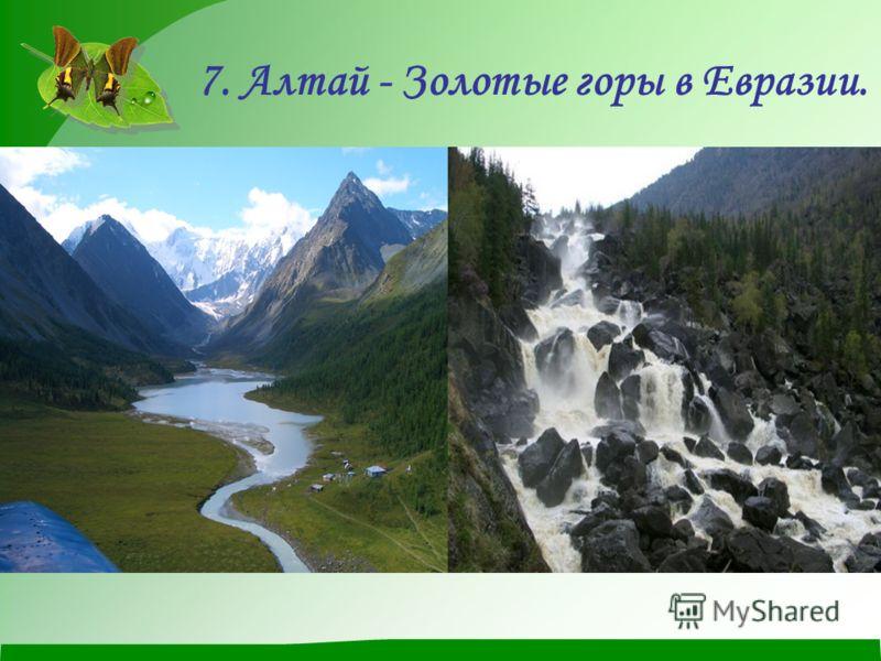 7. Алтай - Золотые горы в Евразии.