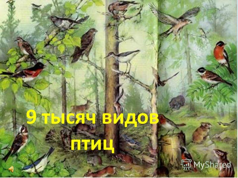 9 тысяч видов птиц