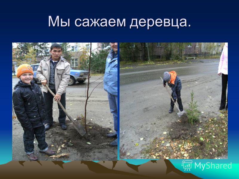Мы сажаем деревца.