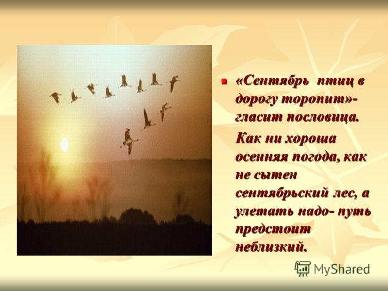 «Сентябрь птиц в дорогу торопит»- гласит пословица. «Сентябрь птиц в дорогу торопит»- гласит пословица. Как ни хороша осенняя погода, как не сытен сентябрьский лес, а улетать надо- путь предстоит неблизкий. Как ни хороша осенняя погода, как не сытен