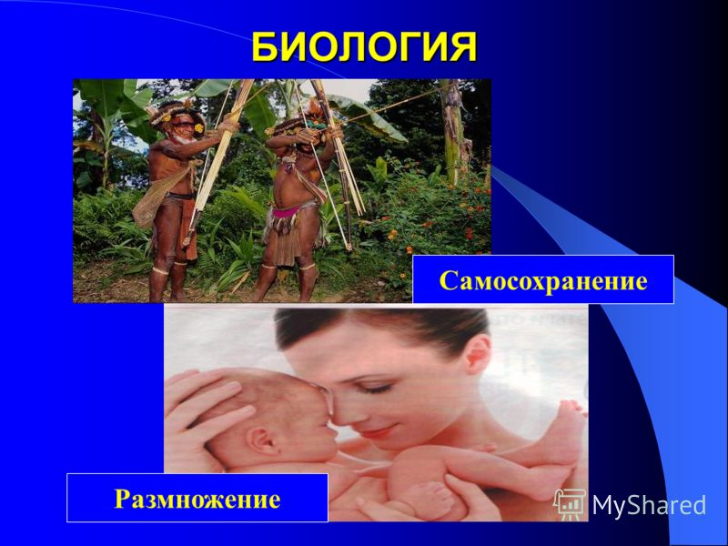 БИОЛОГИЯ Самосохранение Размножение