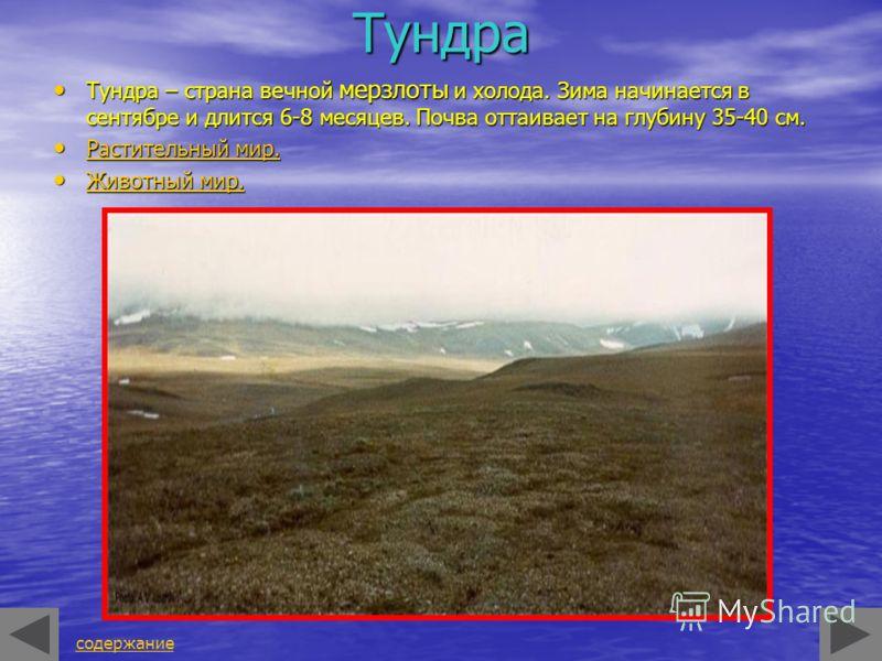 Тундра Тундра – страна вечной мерзлоты и холода. Зима начинается в сентябре и длится 6-8 месяцев. Почва оттаивает на глубину 35-40 см. Тундра – страна вечной мерзлоты и холода. Зима начинается в сентябре и длится 6-8 месяцев. Почва оттаивает на глуби