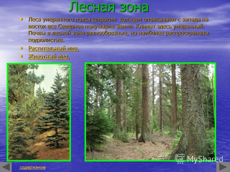 Лесная зона Леса умеренного пояса широким кольцом опоясывают с запада на восток все Северное полушарие Земли. Климат здесь умеренный. Почвы в лесной зоне разнообразные, но наиболее распространены подзолистые. Леса умеренного пояса широким кольцом опо