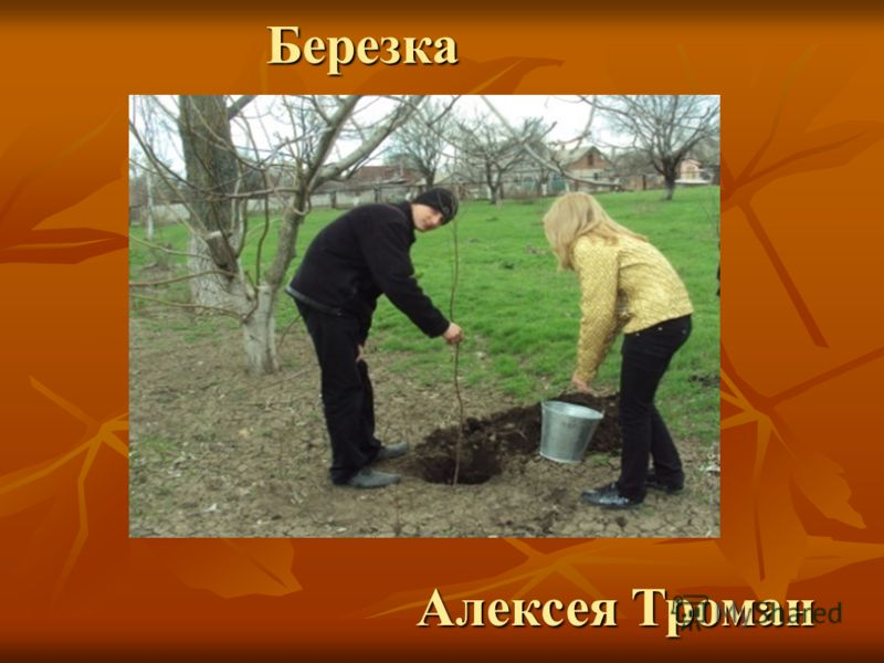 Алексея Троман Березка