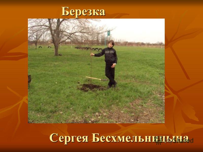 Сергея Бесхмельницына Березка