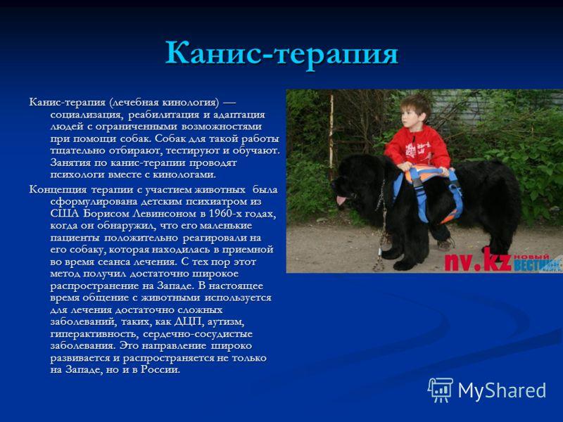Канис-терапия Канис-терапия (лечебная кинология) социализация, реабилитация и адаптация людей с ограниченными возможностями при помощи собак. Собак для такой работы тщательно отбирают, тестируют и обучают. Занятия по канис-терапии проводят психологи