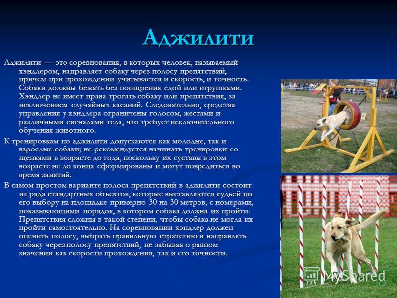 Аджилити Аджилити это соревнования, в которых человек, называемый хэндлером, направляет собаку через полосу препятствий, причем при прохождении учитывается и скорость, и точность. Собаки должны бежать без поощрения едой или игрушками. Хэндлер не имее