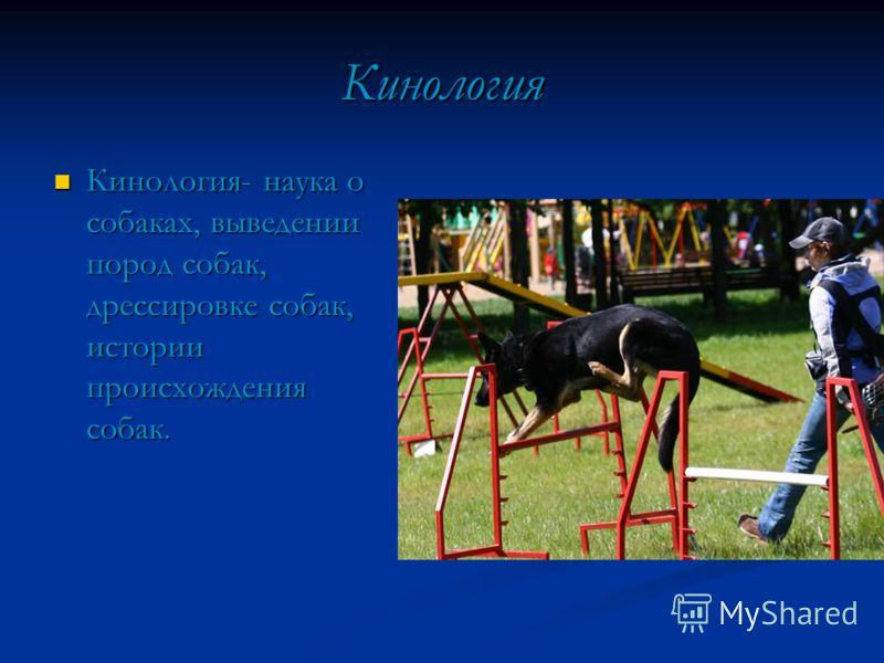 Кинология Кинология- наука о собаках, выведении пород собак, дрессировке собак, истории происхождения собак. Кинология- наука о собаках, выведении пород собак, дрессировке собак, истории происхождения собак.