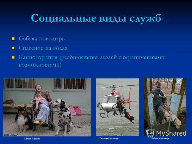 Социальные виды служб Собака-поводырь Собака-поводырь Спасение на водах Спасение на водах Канис-терапия (реабилитация людей с ограниченными возможностями) Канис-терапия (реабилитация людей с ограниченными возможностями) Собака- поводырьСпасение на во