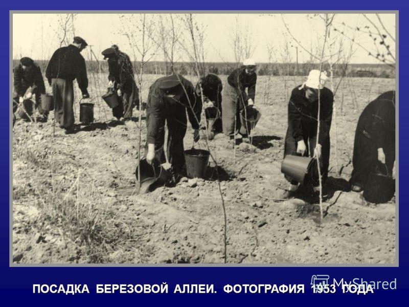 ПОСАДКА БЕРЕЗОВОЙ АЛЛЕИ. ФОТОГРАФИЯ 1953 ГОДА