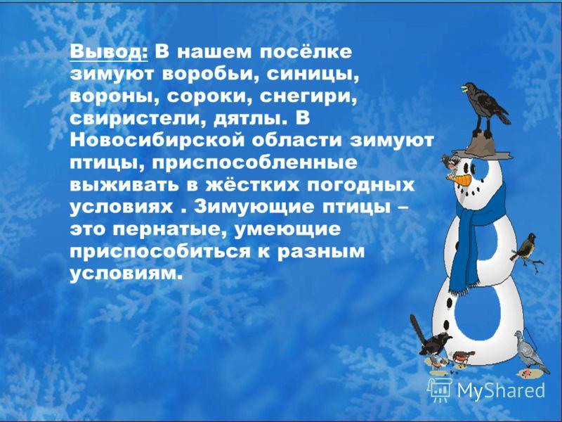 Вывод: В нашем посёлке зимуют воробьи, синицы, вороны, сороки, снегири, свиристели, дятлы. В Новосибирской области зимуют птицы, приспособленные выживать в жёстких погодных условиях. Зимующие птицы – это пернатые, умеющие приспособиться к разным усло