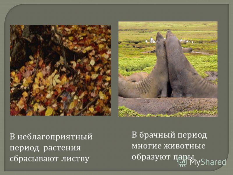В брачный период многие животные образуют пары В неблагоприятный период растения сбрасывают листву