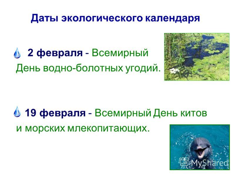 Даты экологического календаря 2 февраля - Всемирный День водно-болотных угодий. 19 февраля - Всемирный День китов и морских млекопитающих.