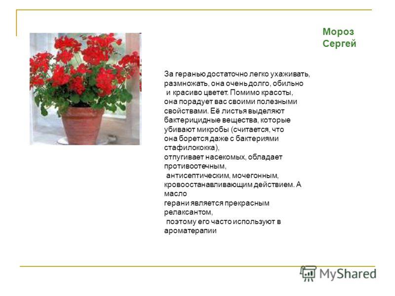 Мороз Сергей За геранью достаточно легко ухаживать, размножать, она очень долго, обильно и красиво цветет. Помимо красоты, она порадует вас своими полезными свойствами. Её листья выделяют бактерицидные вещества, которые убивают микробы (считается, чт